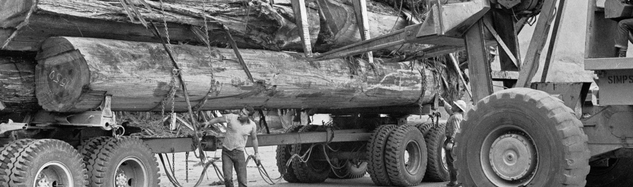 1963, Humboldt County, CA. Giant logs arriving by truck at a lumber mill.