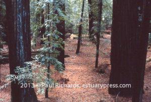 1970, Redwood Forest, Oregon.  Photo by Harvey Richards