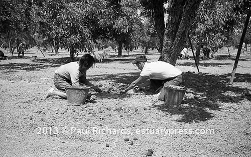 Farm Workers at Work: Fruits and Vegetables