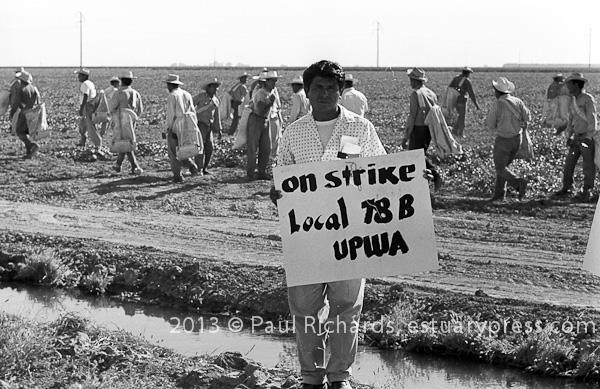 UPWA Striker with California Bracero Program workers in the background, Imperial County, CA, 1962. Photo by Harvey Richards
