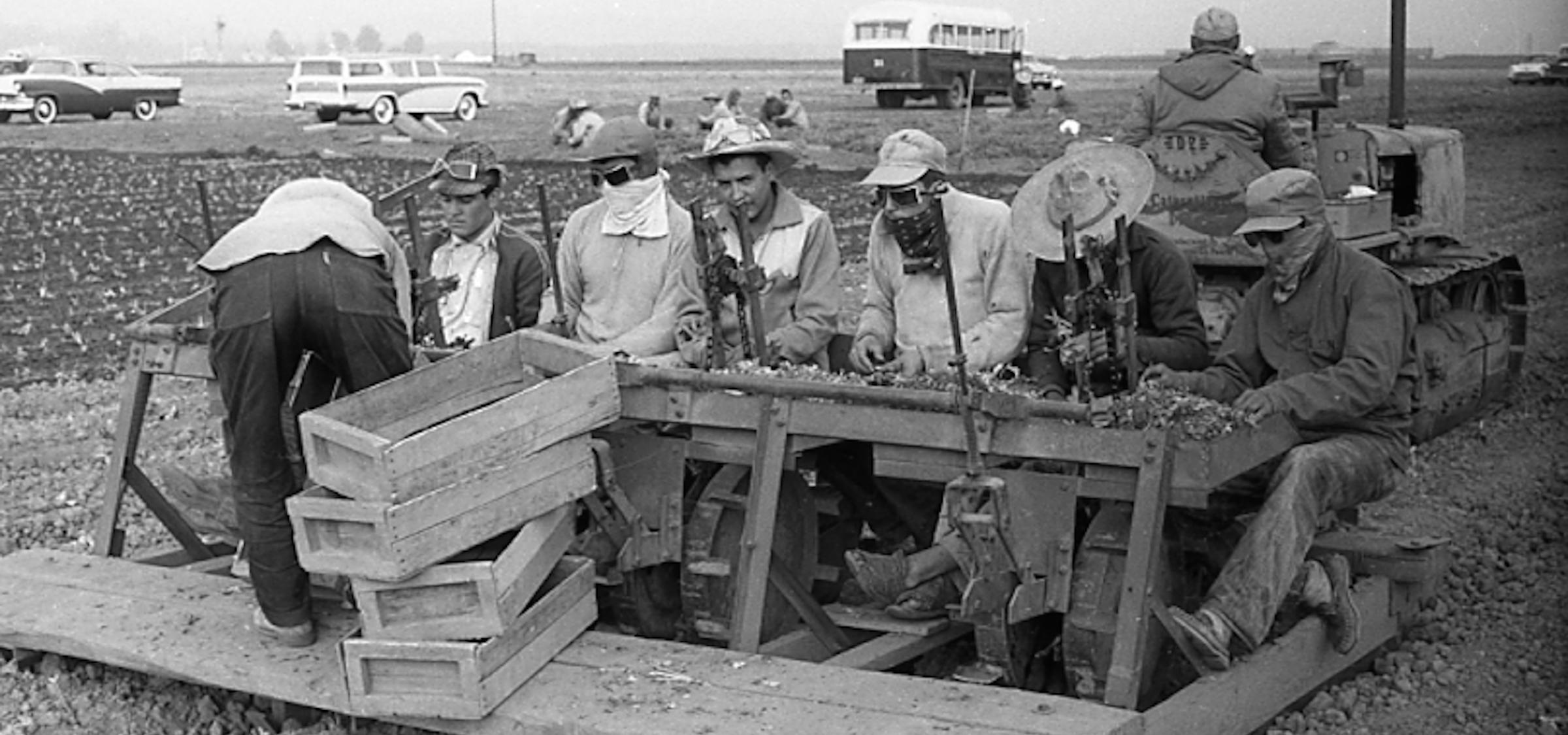 1958, Salinas Valley, California. Planting lettuce.