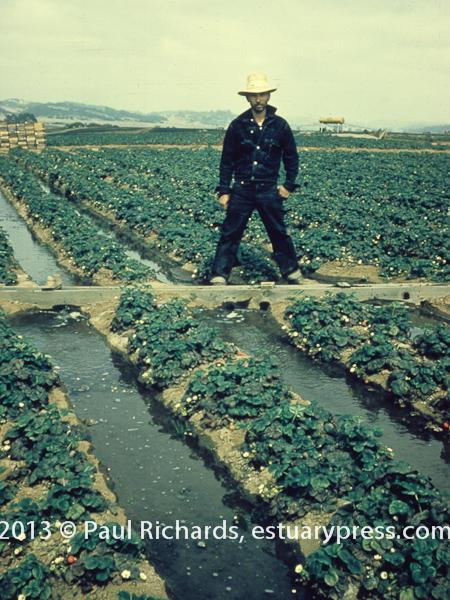 Water in California Agriculture