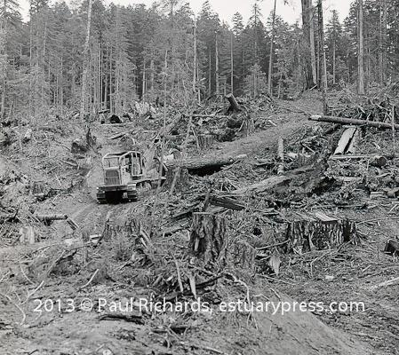 Forest Devastation Gallery