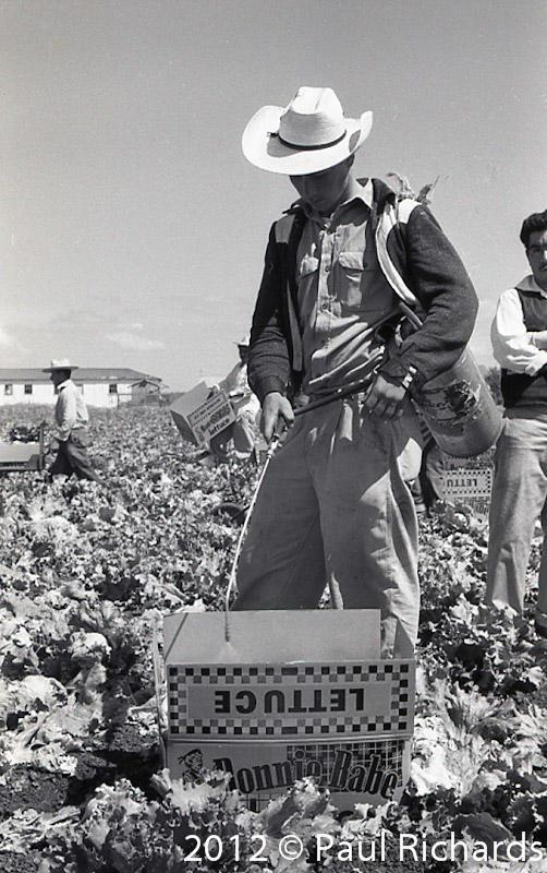 August 10, 1958, Salinas, California.  Farm worker sprays boxed up lettuce on the way to market.