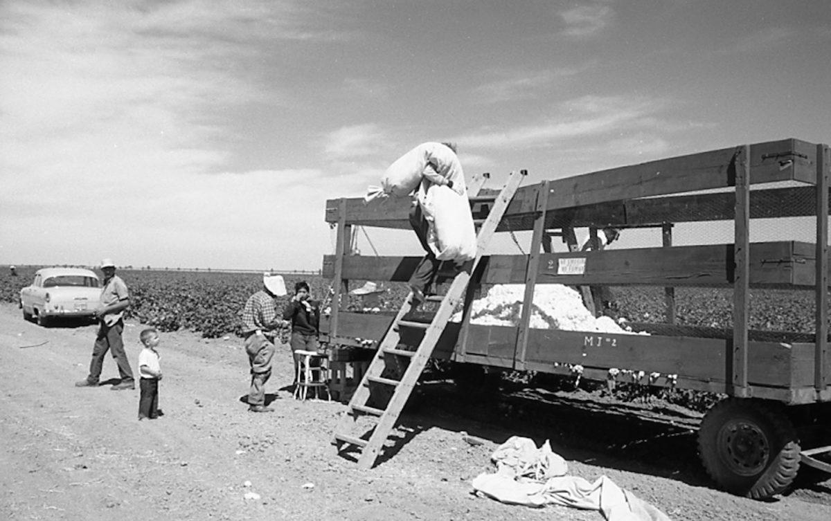 farm workers in root crops cotton and hay