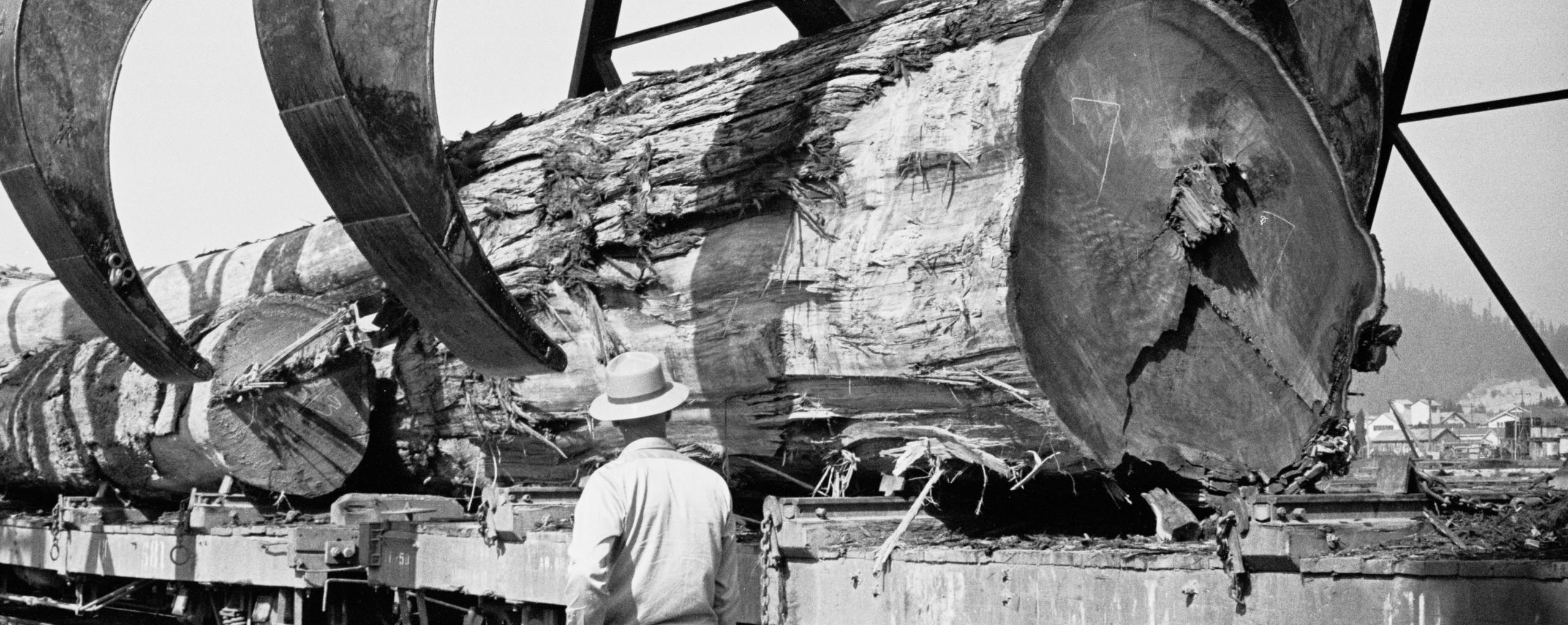 1963, Humboldt County, CA. Giant log lifted from railroad car at a lumber mill.