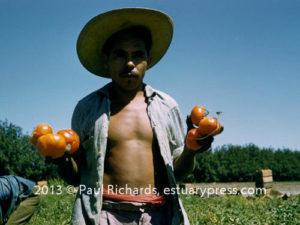 38 tomato picker58