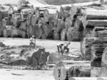40 19630900HumboldtCo Giant log debarking En69 017