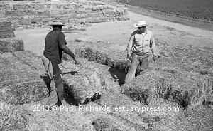 Farm Workers at Work: Root Crops, Cotton, Hay